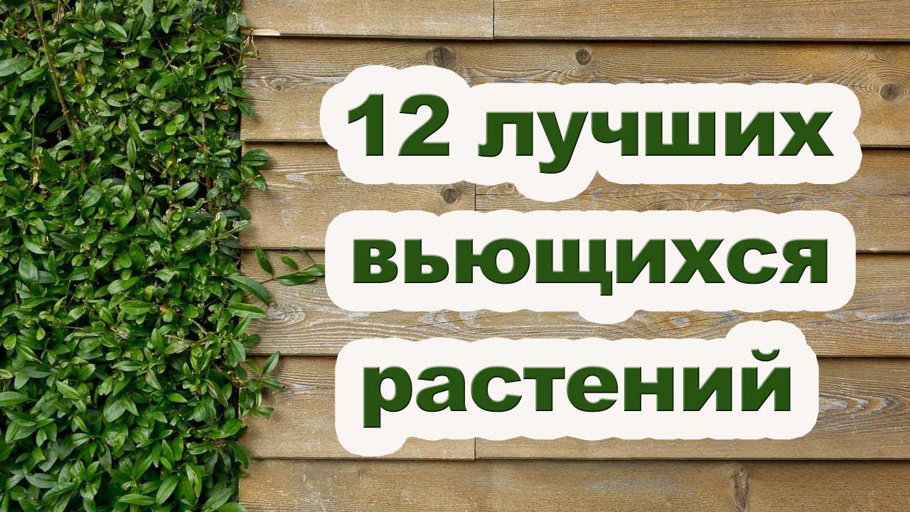 Растения для вертикального озеленения сада [ Живая изгородь ]