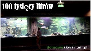 Jedne z największych akwarium w Polsce