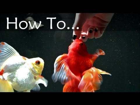 Hand-Feeding Your Fish