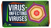 The Baffling Viruses That Infect... Other Viruses