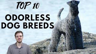 TOP 10 Odorless Dog Breeds