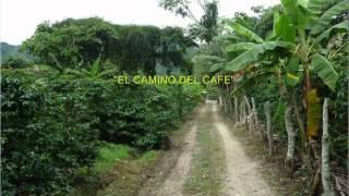 Coros Cantares de Colombia - El camino del café - C-Lujomar.wmv