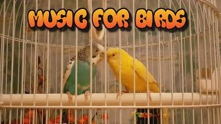 Calming Music For Birds || My Budgies || Relaxing Music to Tame your Birds