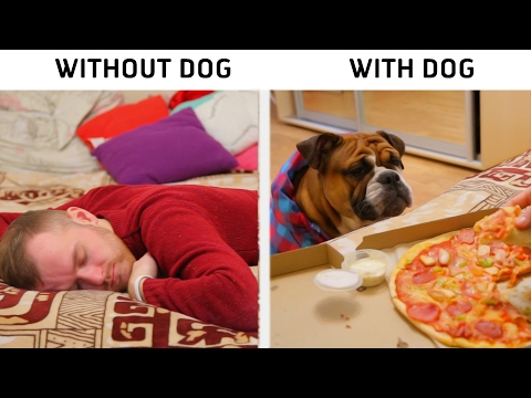 LIFE WITH VS. WITHOUT DOG
