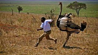 TOP 10 ANIMALES MÁS LETALES DEL SAHARA