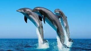 Мультик про дельфинов. Прохождение игры