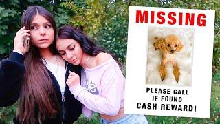 someone stole my puppy... (not a prank)