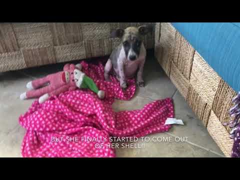 SCARED PUPPY HIDING IN GUTTER GETS SAVED!!!