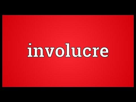 Header of involucre