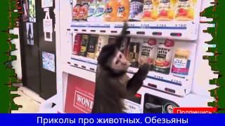 Смешные и прикольные Обезьяны. Веселые приматы