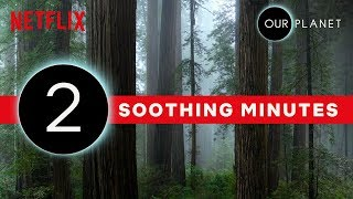 Our Planet | 2 Minutes of Soothing Scenery | Netflix