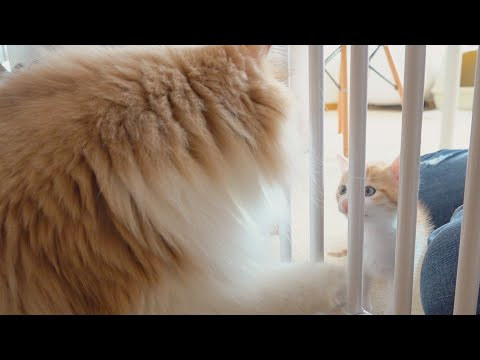 It looks like DD's eager to play with the kittens (ENG SUB)