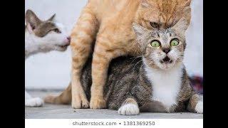 Somali cats making dangęrous sex