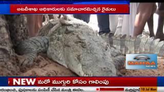 భయపెట్టిన భారీ మొసలి|Largest Crocodile Caught in Kothapalli Village|Wanaparthy District| Mahaa News