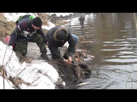 ловля леща на северском донце в ростовской области