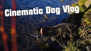 A Cinematic Dog Vlog | AlexGV ft. Lady the Dog