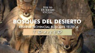 BOSQUES del DESIERTO | Trailer  | Hoy No Duermo en Casa
