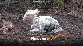 ¿Torturaron a animales aterrados para hacer tu prenda de otoño?