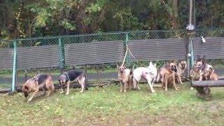お昼から居た犬たちで撮影会。 あいにくの雨で、どろどろになっちゃって...