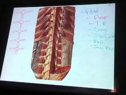 Anato Teorica - Aula/Clase 3 - Parte 1 (Músculos de la Pared ...