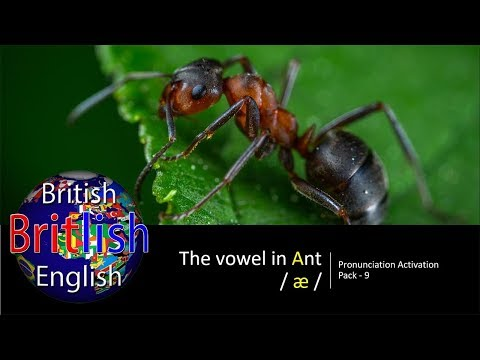 Improve your British English Pronunciation: Vowel in Ant / æ /