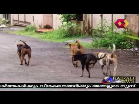 Stray Dog Attack Victim To Be Given Rs Five Lakhs Compensation