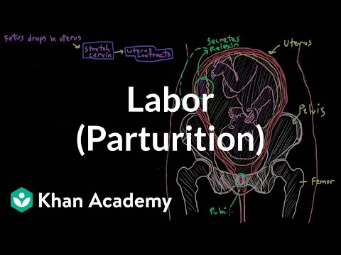 Labor (parturition) | Reproductive system physiology | NCLEX-RN | Khan Academy