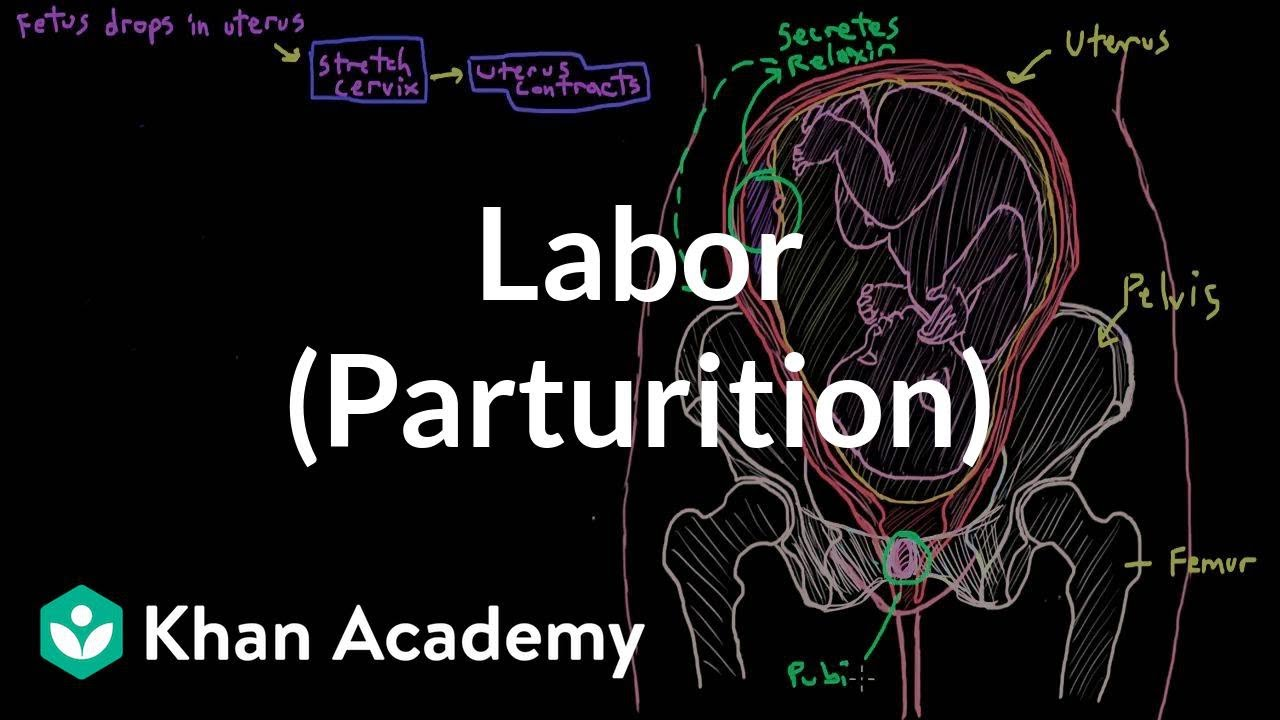 Labor (parturition) (video) | Khan Academy