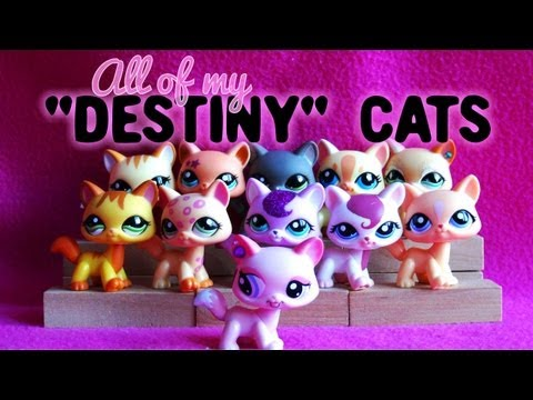 All of My LPS 'Destiny' Cats!