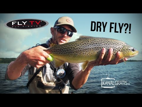 FLY TV - Dry Fly Sea Trout Fishing in Denmark