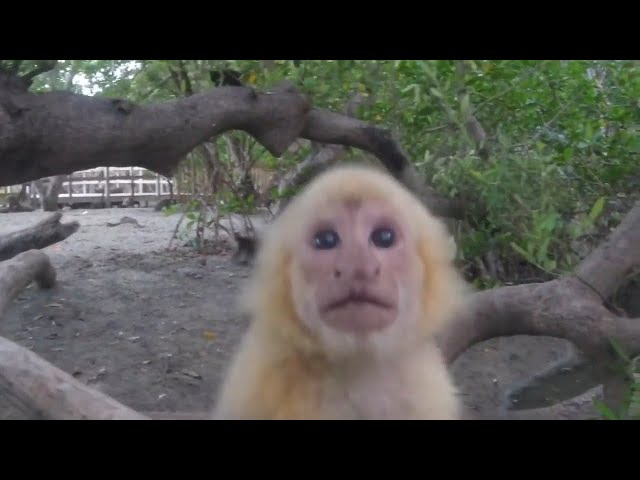 Monkeying around in Playa Nacascolo and Cocos Costa Rica ~Life off the deep end Ep 26
