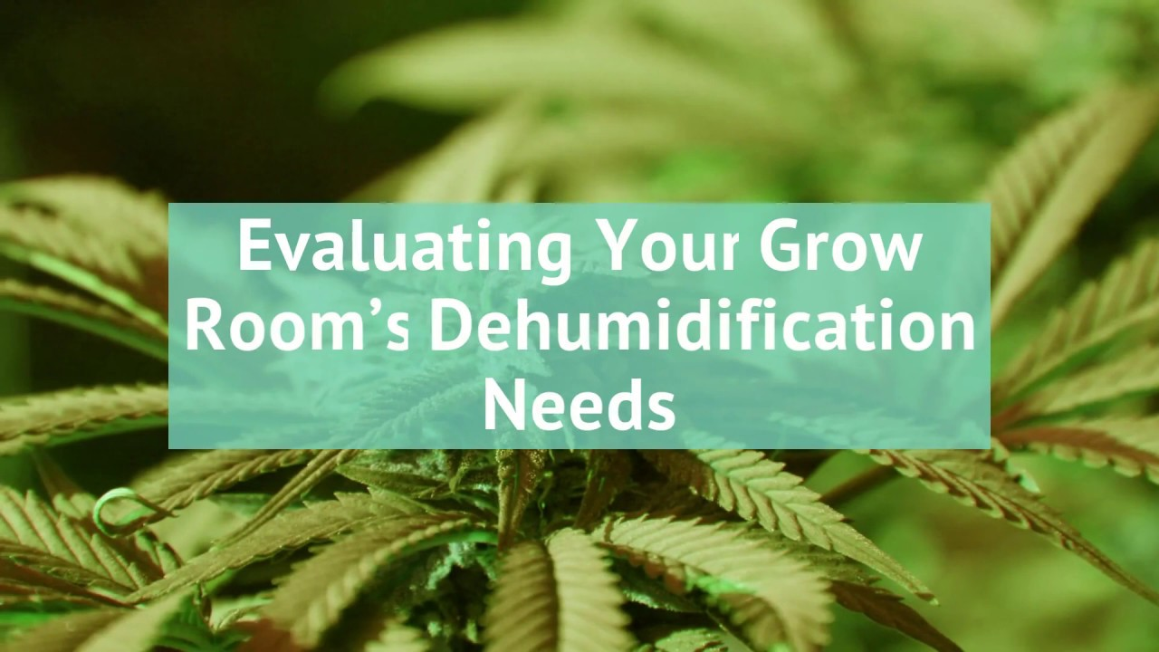 How to Size Your Grow Room Dehumidifier