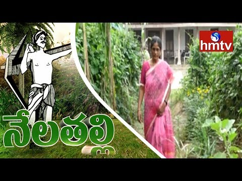 Woman Farmer Ganga Bhavani Success Story In Natural Farming | West Godavari Dist | Nela Talli | hmtv