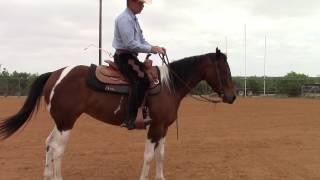 Dale Fredricks Horse Training - Leg Yield, Turns on the Foreha…