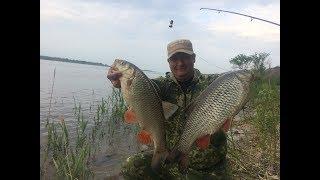 #8 Голавль Рыбалка с Берега на Реке Волге. Обловил Всех Как Клюет Рыба на Фидер - Донку