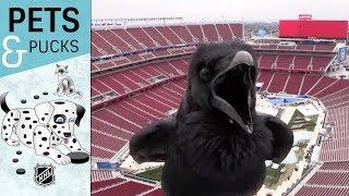 Stadium Series webcam surprise visitor