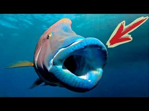 Что Скрывается в Красном Море. Подводные съёмки Рыбы Новый сезон.
