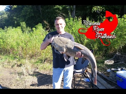 Huge Flathead caught on Maumee River