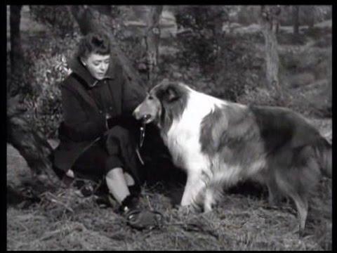 "Lassie - Episode #162 - ""The Big Cat"" - Season 5, Ep. 19 - 01/11/1959"