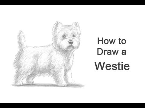 How To Draw A Dog West Highland White Terrier Westie