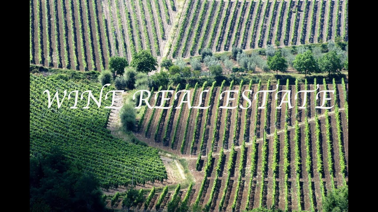 WINERIES & VINEYARDS FOR SALE ITALY EXPERT ADVICE , WINE REAL ESTATE -  Romolini | Christie's