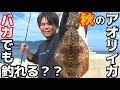 イカのアニサキスの見つけ方と除去する方法 - YouTube