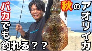 秋のイカは簡単に釣れる?エギングでアオリイカ爆釣!