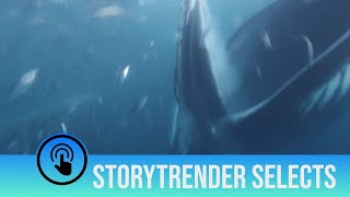 Massive whale almost swallows diver whole by mistake