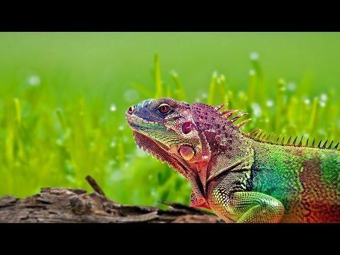Ящерицы Виды, описание, интересные факты