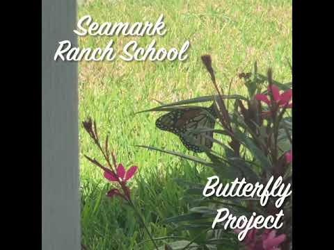 Butterfly Project Seamark Ranch School