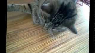 кот наелся валерьянки