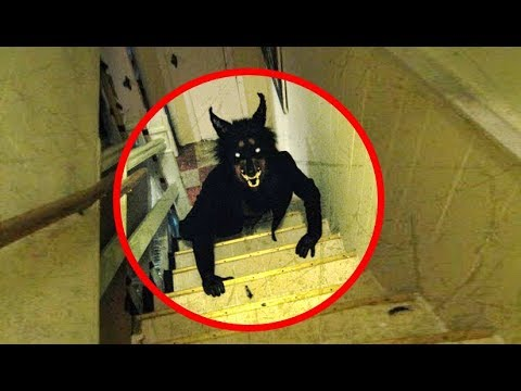 Download 5 Real Life Werewolves Caught On Camera