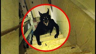5 Real Life Werewolves Caught On Camera