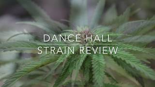 Dance Hall Strain Review